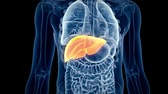 humane : medical 3d animation of the human liver