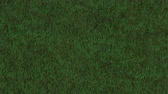 Grass Field Loop - Animation of grassy field. Seamless loop. High-res file is much more detailed than what is visible on the preview.