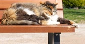A cat sleeping on a bench and after get attention. it wakeup.