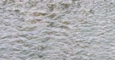 Flowing water on rock with most after rain. Stock Footage