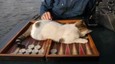 dadi : Sweet cat lie down on backgammon table with playing backgammon checker and dice. Filmati Stock