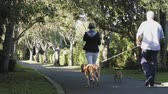 bank : Retired Senior Couple walking in Park with dogs