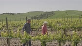 grape : Senior couple on holiday visiting vineyard
