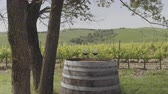 çiftçilik : Two Red wine glasses at vineyard in Italy Stok Video