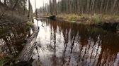 болото : River water flow in the forest. Wetland of the pond