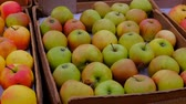 grocer : Marketplace. In the foreground colorful apples in boxes. Fresh fruit in market Stock Footage
