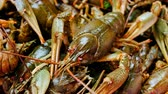 ıstakoz : Description: Live fresh crayfish close-up. Seafood background. 4k video