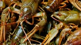 shell : Description: Live fresh crayfish close-up. Seafood background. 4k video