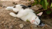 Homeless Tired Cat Lying In Nature. Wideo