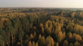 sägewerk : Aerial view of autumn forest. Fall landscape with red, yellow and green trees. Drone video 4k