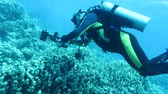 mergulhador : Underwater photographer Stock Footage