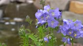 flower bed : Delphinium hybrid in the garden