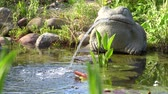 sheets : water-spouting frog at the garden pond