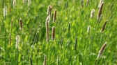 Nature summer background with grass on the wind