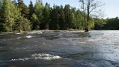 Summer landscape of Kymi in Finland, fast river water motion along coastal forest