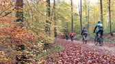 de faia : Group of cyclists in the autumn forest. Vídeos