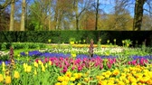 Flowers in the park Keukenhof,  the worlds largest flower garden, situated near Lisse, the Netherlands.