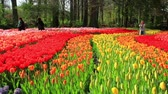 LISSE, THE NETHERLANDS - APRIL 21 2016: Park Keukenhof,  the worlds largest flower garden, situated near Lisse, the Netherlands.