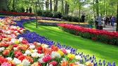 LISSE, THE NETHERLANDS - MAY 05 2016: Park Keukenhof,  the worlds largest flower garden, situated near Lisse, the Netherlands.