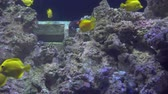 подводное : Underwater view of Colorful Exotic fishes in an Aquarium in 4K (UHD)