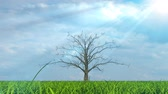 field : Tree growing on green field under the sun Stock Footage