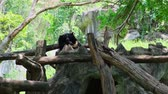 панда : The bear is sleeping in a tree. Concept of animals in the zoo. Стоковые видеозаписи
