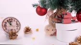 noel kartı : Happy new year 2020. Christmas composition with a rat, a symbol of the year. Rat near the Christmas tree, gift boxes and watches Stok Video