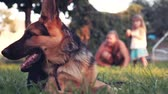 arquejo : Slowmotion of ground level view of puppy dog german shepherd looking at camera with tree and swinging bench in background