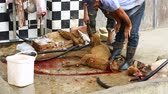 asiática : Muslims help in halal slaughtering a sheep Stock Footage