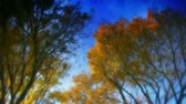 осень : Delicately effected HD shot of trees, light wind blowing. Very dreamy feel. Source: Shot on HDV 1080.-