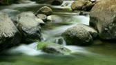 musgo : Long exposure time-lapse of water running in a beautiful, clean little creek. Shot on DSLR and composited.- Stock Footage