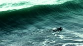faaliyetler : Real slow motion shot at 120fps. Surfer paddling in ocean.- Stok Video