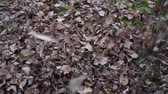 deszcz : falling leaves blowing in the wind slow motion shooting slowly fall to the ground grass