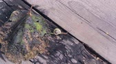 snail crawling on the autumn leaf and on a tree on a sunny autumn day.4k,24fps. Vídeos
