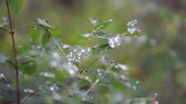 Water drops in a stream of clear liquid when the lawn grass is moistened through a spray close-up.4k,24fps.