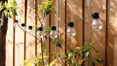 sedět : trendy globe string lights outdoor hanging from trees in private garden moving in the wind with wooden fence and greenery in the background