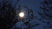 arrepiante : full moon at night among tree branches, camera panning around the scene