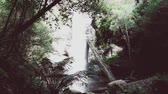 immersive : remote hidden waterfalls and wild Australian bush during a hike in Tasmania with its untouched landscape featuring eucalypus and ferns