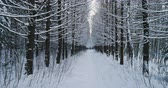 wintertime : Aerial video beautiful forest landscape in winter, alley of snowing trees. Slow motion.