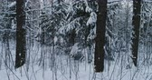 wintertime : Aerial video beautiful forest landscape in winter. Camera moving in left Stock Footage