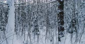 wintertime : Aerial video beautiful forest landscape in winter evening. Camera moving in left
