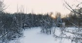 dinginlik : Aerial video side view of winter forest with trees in snow and orange sun. Camera moving bottom-up. Stok Video
