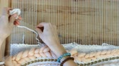 tecidas : Weaving on a loom. Closeup womans hands runs the yarn through the threads of the loom. Top view. Vídeos