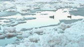 deriva : Ice drift on the river. Moving ice floes close up. Ducks on river.