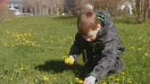 considering : Boy collects dandelions on the lawn in the spring city park. Stock Footage