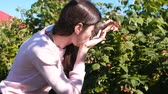framboesa : Young brunette woman eats raspberries, tearing it from the bushes in the country. Stock Footage