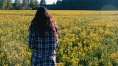 prérie : Unrecognizable woman brunette walks on the field of yellow flowers. Back view. Dostupné videozáznamy