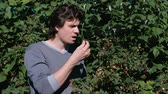 chalet : Young brunet man eats raspberries, tearing it from the bushes in the country.