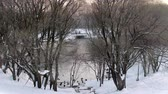 sity : View of the pond with ducks through the trees in the winter city park. Stock Footage