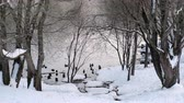 sity : Close-up view of the pond with ducks through the trees in the winter city park.